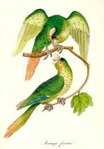 Aus Auktion 44: Brehm, Papageien, 1842